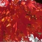 秋の3連休の京都は大混雑!(2014年)
