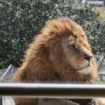 ケニア号でサファリワールドの旅、肉食動物ゾーンへ!