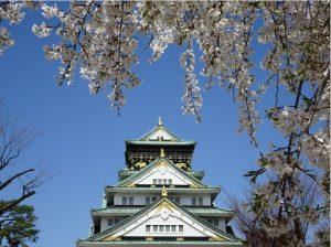 大坂城の桜