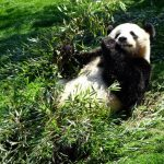 パンダに会いに、久々、白浜のアドベンチャーワールドへ!