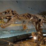 福井の恐竜博物館は電車がオススメ!不運さえなければ・・・