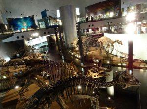 恐竜骨格標本_福井県立恐竜博物館