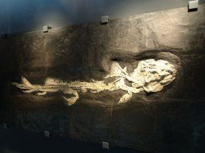 化石_福井県立恐竜博物館