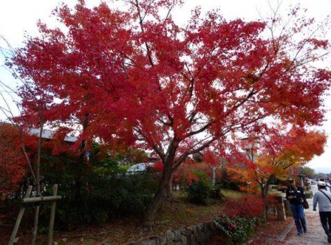渡月橋の紅葉
