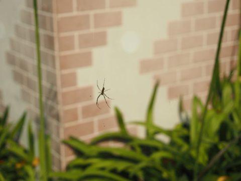 蜘蛛、OM-D E-M5 mark3の写真