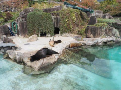 アシカ,王子動物園