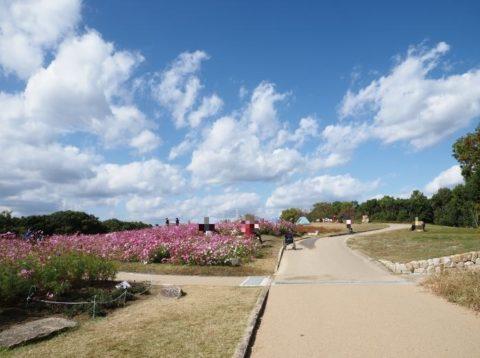 万博記念公園のコスモス