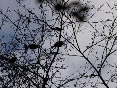 摂津峡の野鳥
