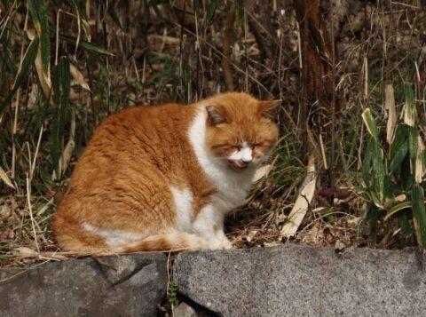 山田池公園の猫