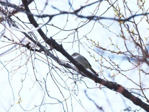 淀川河川敷の不明の野鳥